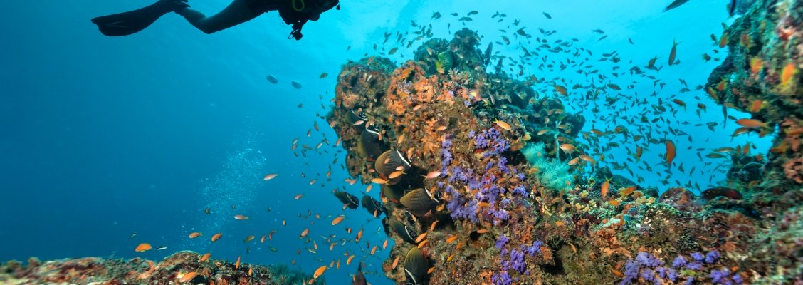 3 must-see diving spots you should visit with CharterClick